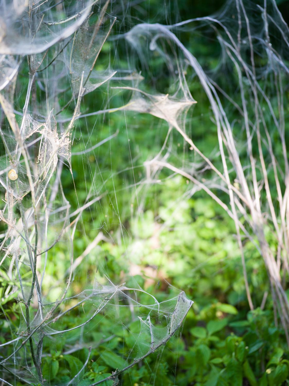 MA-Web-yponomeuta-1500px-sRGB-18