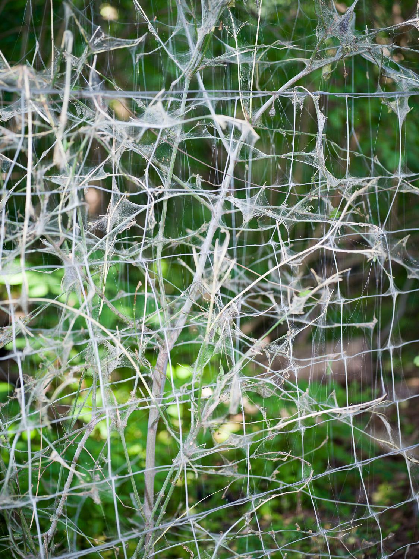 MA-Web-yponomeuta-1500px-sRGB-9
